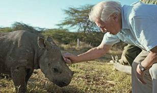 Attenborough (BBC/DAVID CHANCELLOR)