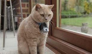 Secret_Life_of_Cats