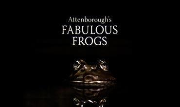 Attenboroughs-Fabulous-Frogs